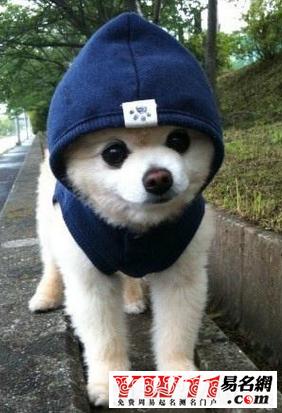 宠物狗个性名字