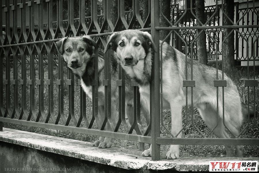 起名网 周公解梦 动物 > 周公解梦狗     7, 梦见狗 周公解梦之梦到狗