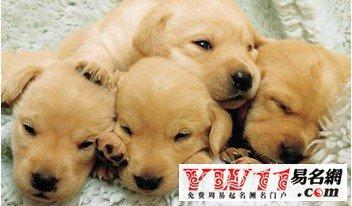 梦见狗是什么意思_梦见狗