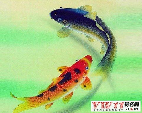 梦见鱼来亲我