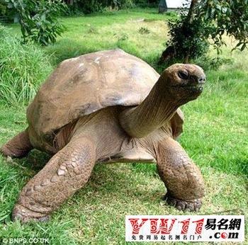 梦见乌龟是什么意思?