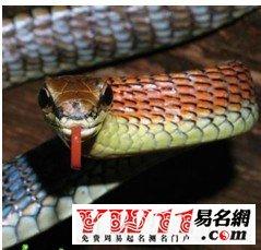 【梦见蛇 周公解梦】梦见蛇