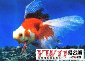 梦见很多鱼