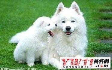 好听的狗狗名字加中文意思
