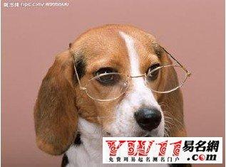 最好听的男狗狗英文名字