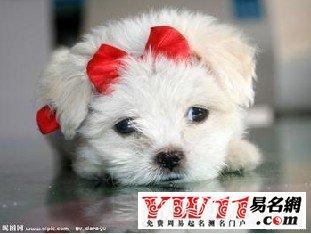 可爱狗狗名字