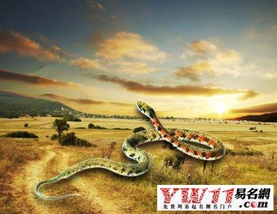 梦见好多蛇是什么预兆_梦见好多蛇