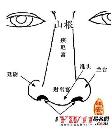鼻子立体结构图解