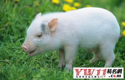 猪与人图片大全可爱
