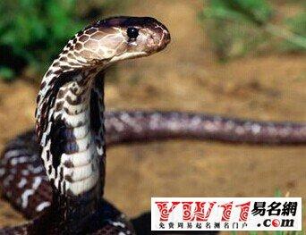 梦见一对蛇是什么意思吗