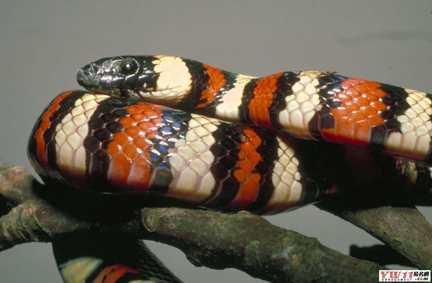 做梦梦到白色的蛇_做梦梦见蛇