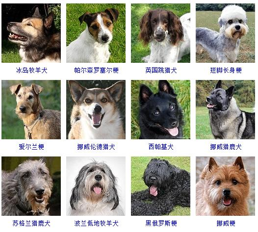 各类动物图片和名称