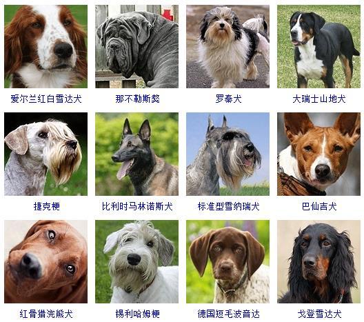 狗狗名字大全,狗狗品种名字大全