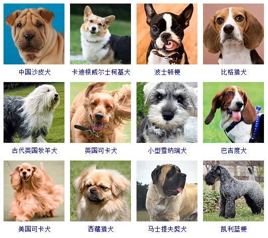 宠物狗图片和名字_狗狗品种大全及名字图片