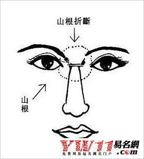 鼻子面相图解:鼻子面相看人生运程