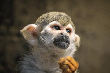 2016猴年本命年运势图片