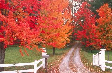 描写秋天的句子大全