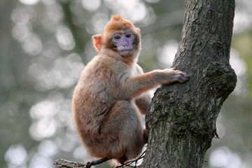 属猴的几月出生最好,属猴的几月出生好