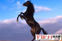 属马的几月出生最好,属马的几月