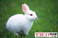 属兔的年份,属兔的是哪年出生