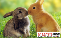 属相婚配表,属兔和什么属相最配