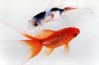 梦见捉鱼是什么意思周公解梦