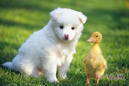 """为纪念庆祝祖国生日,给动物或宠物起""""圆圆"""",""""庆庆"""",""""团团""""之类的名字"""