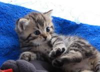 宠物猫名字,宠物猫名字大全