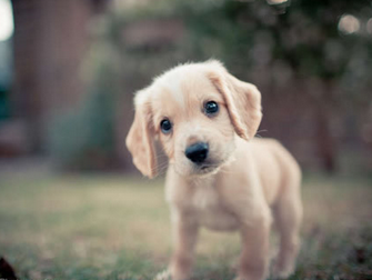 起名网 起名大全 好听的名字 > 狗狗取名大全     可爱的狗狗取名大全