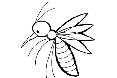 蚊子简笔画 步骤