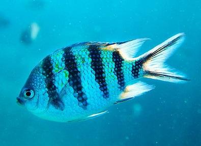 梦见鱼什么意思