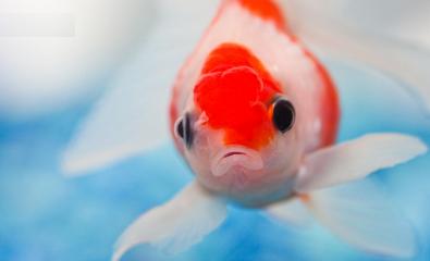 梦见鱼,梦见鱼是什么意思