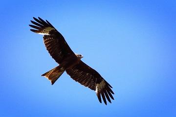 梦见空中飞着大鹰