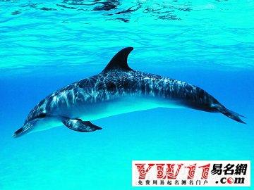 起名网 周公解梦 动物 > 梦见海豚    关于电影海豚湾,看得无比心塞