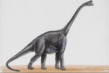 就是在一个类似办公室的地方,见到一只母恐龙,长的很可爱,也很温柔