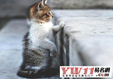 可爱猫咪的笔画