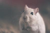 1996年属鼠人一生命运