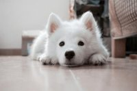 洋气的狗狗名字大全