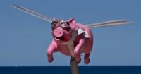 2019年属猪几月旺父母