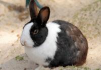 o型血生肖属兔人的性格特点