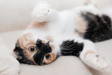 有寓意的猫名字有哪些