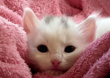 洋气一点的小猫名字