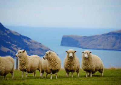 1991年属羊的2019年运程