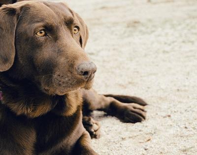 梦见收养流浪狗