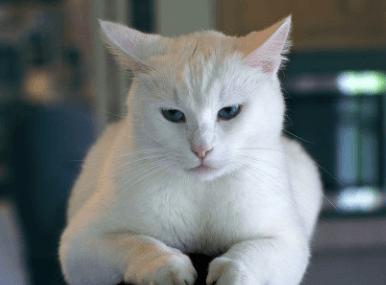 猫叫什么名字最招财-轻博客