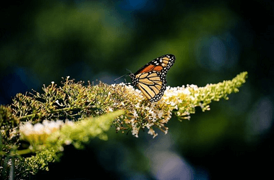 梦见蝴蝶是什么意思