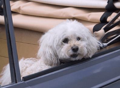泰迪狗独一无二的名字