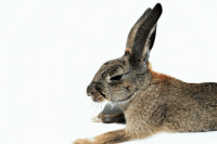 兔子宠物名字可爱洋气