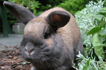 荷兰猪宠物名字大全萌